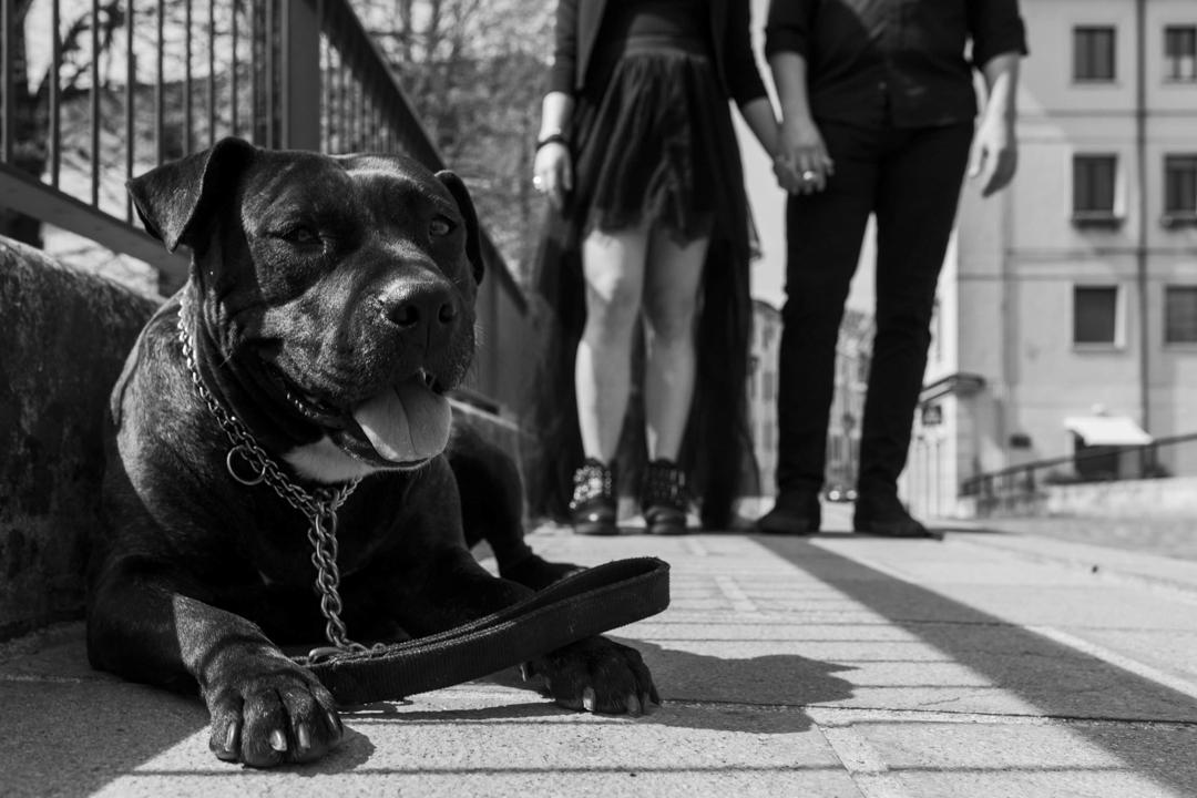 Un cane accuccito per strada. Servizio fotografico di coppia SWP a Vicenza