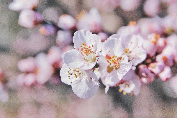 Matrimonio in primavera e scelta dei fiori